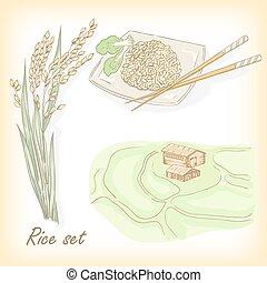 Rice set. Spikelet of rice, rice porridge, rice field, hand draw