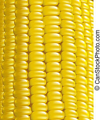 Ripe corn. Fragment. Vector illustration macro.