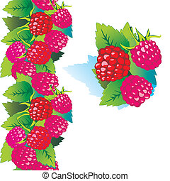 Ripe raspberry on a white background.
