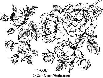 Roses flower drawing.
