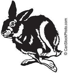 running hare black and white illustration
