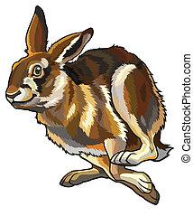 running hare, lepus europaeus, illustration isolated on white background