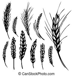 set of rye and wheat