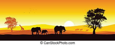 Stock vector of African wildlife