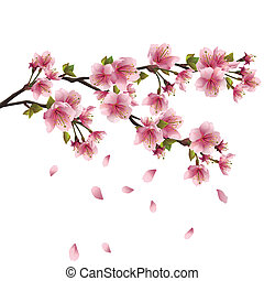Sakura blossom pink - Japanese cherry tree with flying petals isolated on white background. Vector illustration