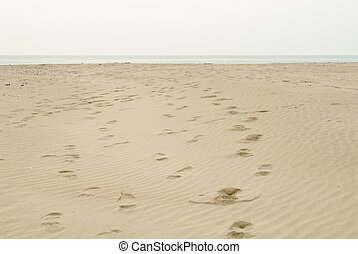 sand beach of Dadaepo in busan