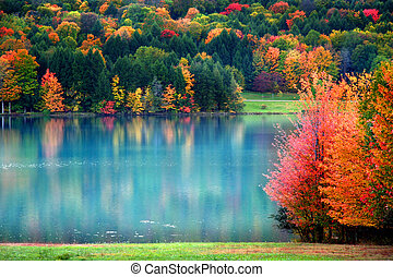 Colorful trees in Allegheny national forest Pennsylvania