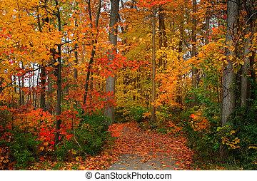 Scenic autumn walk way in michigan upper peninsula