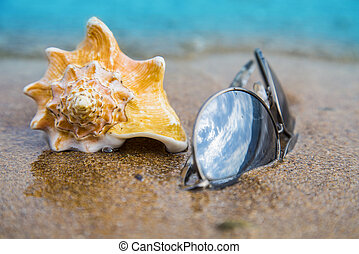Seashell and sun glasses on sand of the beach in sunlight, background, close up