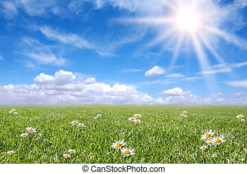 Serene Meadow in Spring With Happy Bright Sunshine