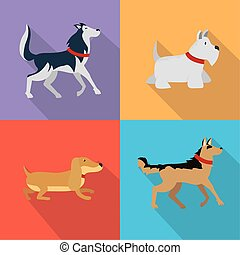 set dogs domestic animal pets