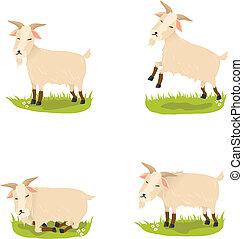 Set of cute vector goats