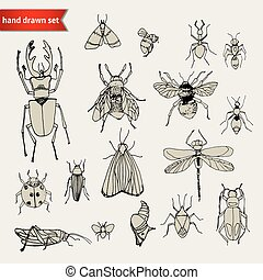 set of doodle insects, sketch