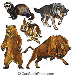 set with wild animals, beasts of europe forest, images isolated on white background