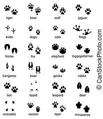 Set of footprints of wild animals