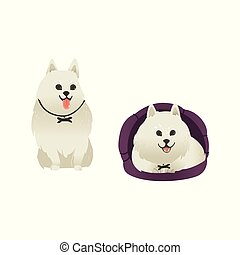 Set of happy smiling white dogs sitting and lying in dog bed.