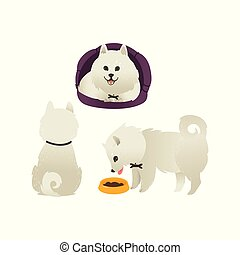 Set of happy smiling white dogs sitting, eating from bowl and lying in dog bed.