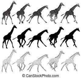 Set of running and walking giraffes