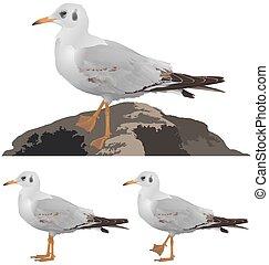 Set of seagulls isolated on white