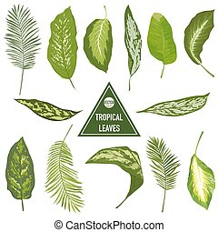 Set of Tropical Leaves - for design elements, scrapbooking - in vector