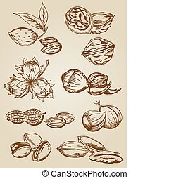 set of vector various nuts in retro style