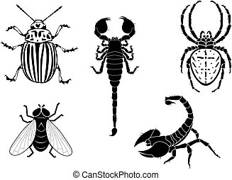 set of vector illustration of potato beetle, fly, scorpion and spider