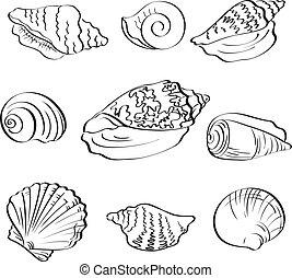 Set different marine seashells, black contour on white background. Vector