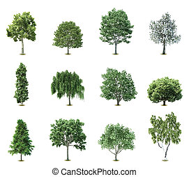 Illustration of a set of variety of trees