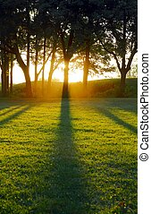 The setting sun casting tree shadows across a green field from behind the trunks of a row of tall trees on the horizon