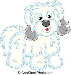 Shaggy Bichon Avanese dog