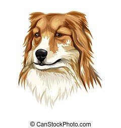 Sheltie Shetland sheepdog vector illustration