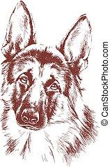 shepherd vector dog sketch