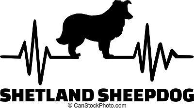 Shetland Sheepdog heartbeat word