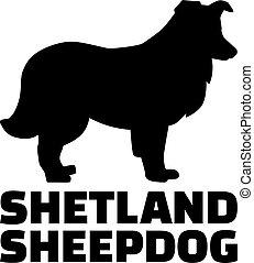 Shetland Sheepdog silhouette real word