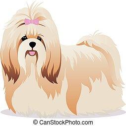 Shih Tzu dog vector illustration
