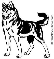 sled dog siberian husky breed, black and white illustration