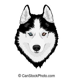 Black and white Siberian husky with multi-colored eyes. Hand drawn portrait of dog. Vector illustration
