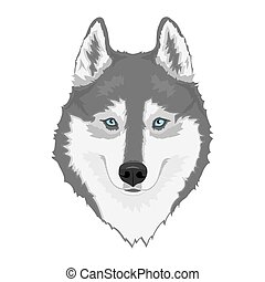 Gray and white Siberian husky with blue eyes. Hand drawn portrait of dog. Vector illustration