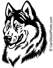 dog head, siberian husky breed, black and white image