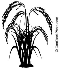 silhouette rice plant on white background vector design
