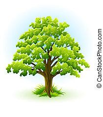 single oak tree with green leafage illustration, isolated on white background