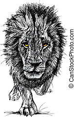 Sketch of a big male African lion