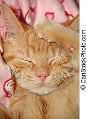 Sweet kitten is taking a nap