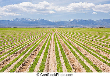 A farm in southern California with the San Gabriel mountains in the background.