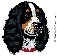 dog head, english cocker spaniel breed, image isolated on white background