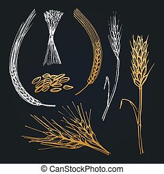 Spikes and ears of wheat, barley, rye, hand drawn collection. Vector illustrations for brewery icon, farm logotype.