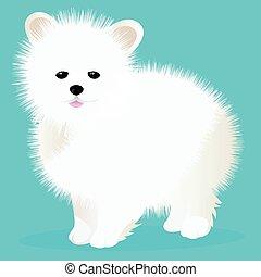 Spitz dog white
