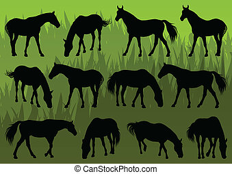 Sport and farm horse detailed silhouettes illustration collection background vector