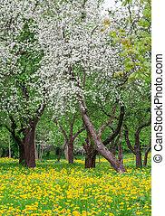 Spring, blooming park