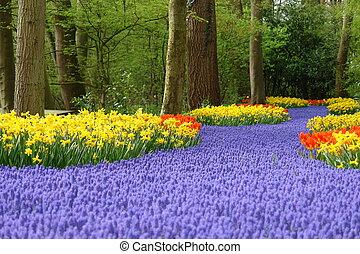 Spring flower bed in Keukenhof, the Netherlands
